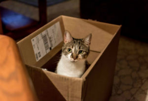 How to Ship a Cat