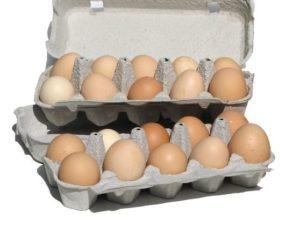 Ship organic chicken eggs