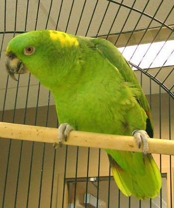 Ship live parrots