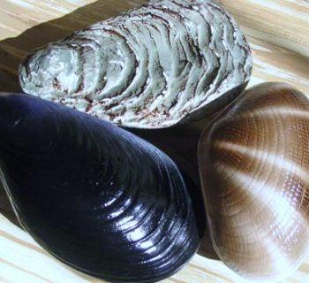 Ship Fresh Shellfish