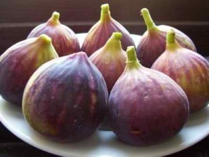 Ship Fresh Figs